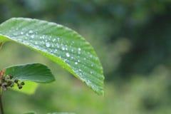 湿叶子的宏指令 库存照片