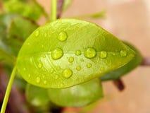 湿叶子 免版税库存图片