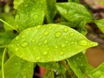 湿叶子 库存图片