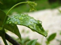 湿叶子 库存照片
