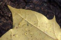 湿叶子 免版税图库摄影