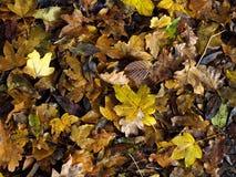 湿和泥泞的秋天叶子在地面成群了 免版税库存图片