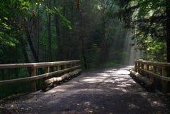 湿地面桥梁01 图库摄影