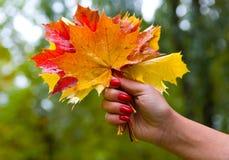 湿多彩多姿的叶子花束在一只美好的女性手上 库存图片
