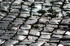 湿大卵石在阳光下 免版税库存照片