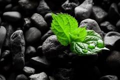 湿小卵石有新芽背景 免版税库存图片