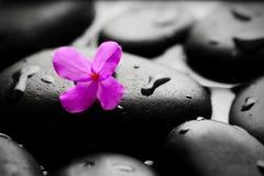 湿小卵石有花背景 免版税库存图片