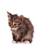湿小猫 免版税图库摄影