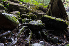 湿岩石 免版税库存照片