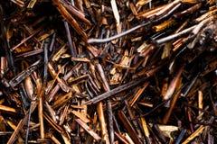 湿布朗自然 库存图片