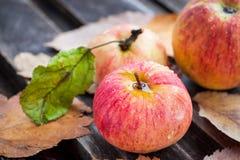 湿新鲜的红色苹果在庭院里 免版税库存图片