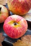 湿新鲜的红色苹果在庭院里 库存照片