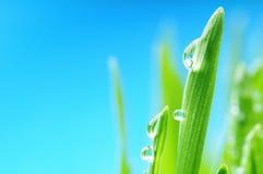 湿新鲜的草的雨 图库摄影