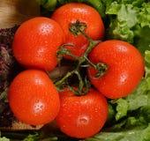 湿新鲜的蕃茄 免版税库存照片