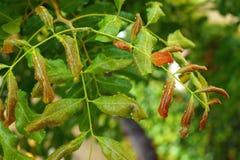 湿树叶子 免版税库存照片