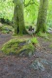 湿树干和绿色青苔在森林特写镜头 免版税库存照片