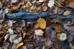 湿森林地板人工制品和叶子 免版税库存照片