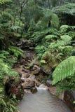 湿森林的雨 图库摄影