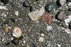 湿沙子和壳在Massey海滩,华盛顿州 免版税库存图片
