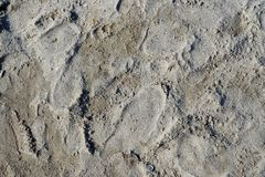 湿沙子在与被弄脏的脚印的海边 免版税库存图片