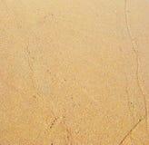 湿沙子 免版税库存照片