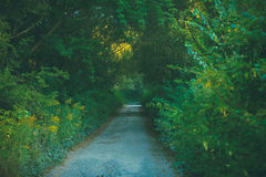 湿泥泞的乡下公路 免版税库存图片