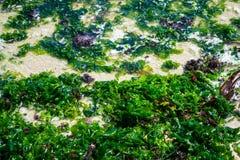 湿海草 图库摄影