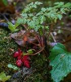 湿灌木在森林里 免版税库存照片
