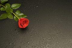 湿玫瑰色的系列 库存图片