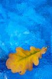湿玻璃的叶子 免版税库存图片