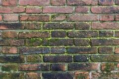 湿生苔砖墙 免版税库存图片
