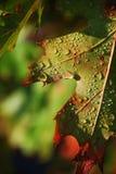 湿的叶子 免版税库存照片