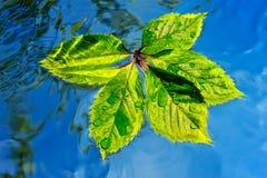 湿的叶子 图库摄影