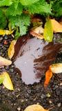 湿的叶子 免版税图库摄影