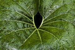 湿的叶子 免版税库存图片
