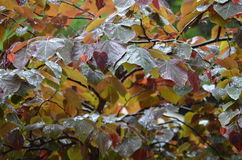 湿的叶子 库存照片