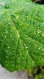 湿的叶子 库存图片