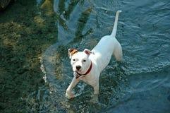 湿的小狗 库存照片