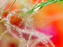 湿的接近的叶子 免版税库存图片