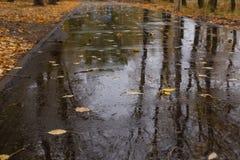 湿的柏油路 库存照片