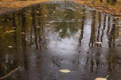 湿的柏油路 免版税图库摄影