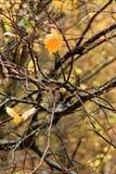 湿的榆木 库存照片