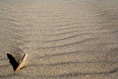 湿的沙子 库存图片