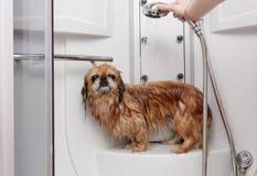 湿的狗 库存图片