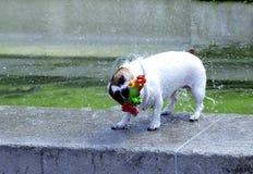 湿的狗 免版税库存图片