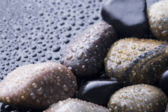 湿的石头 库存照片
