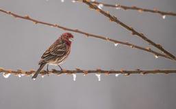 湿的羽毛 免版税图库摄影