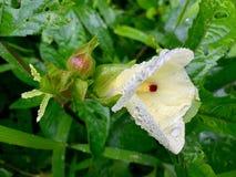 湿的花 图库摄影