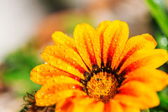 湿的花 免版税库存照片