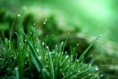 湿的草 免版税库存图片